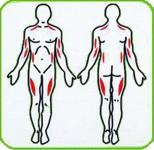На рисунке показана работа определанных мышц от использования тренажера